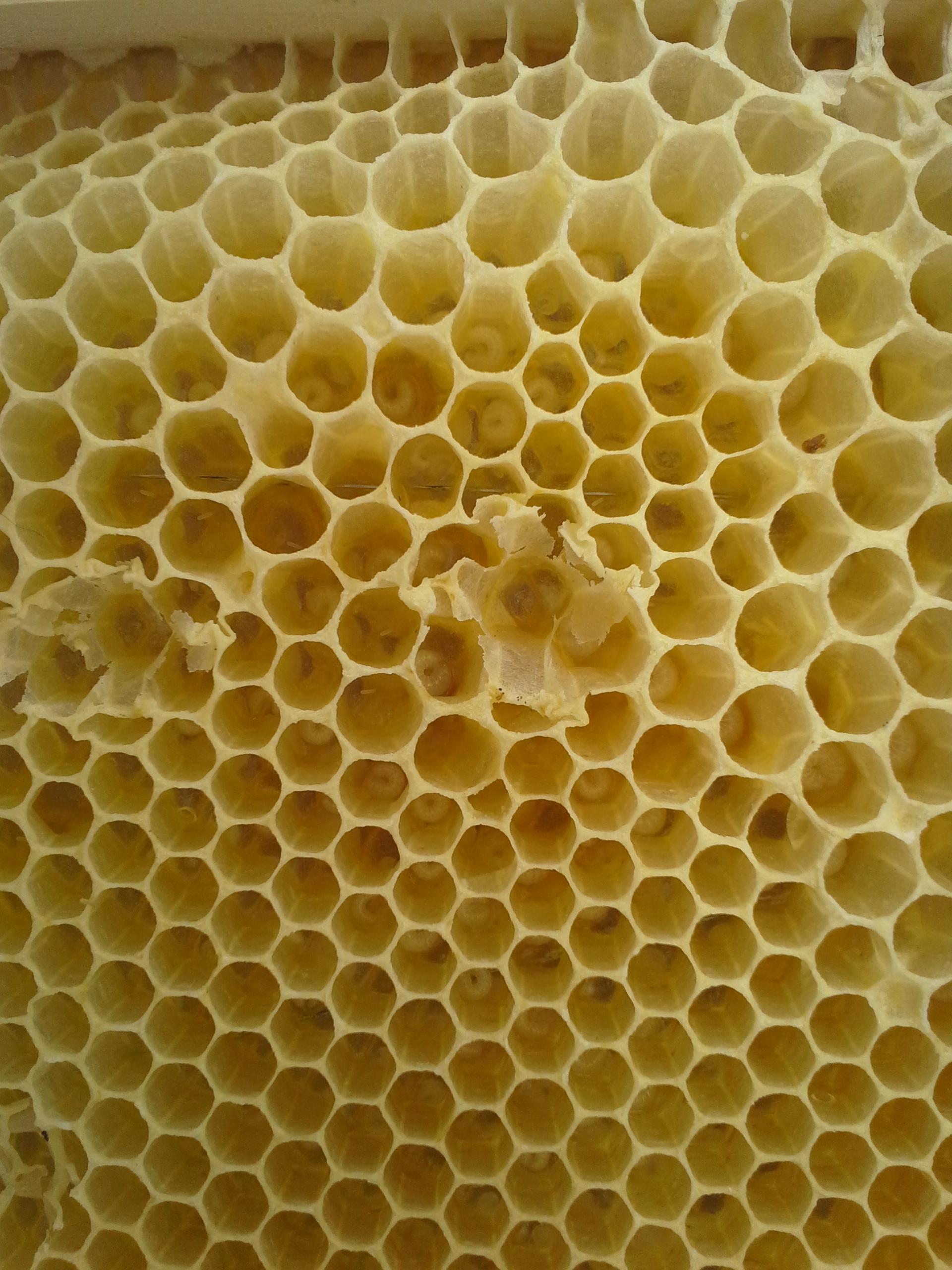 Una visita a una granja de abejas muy especial
