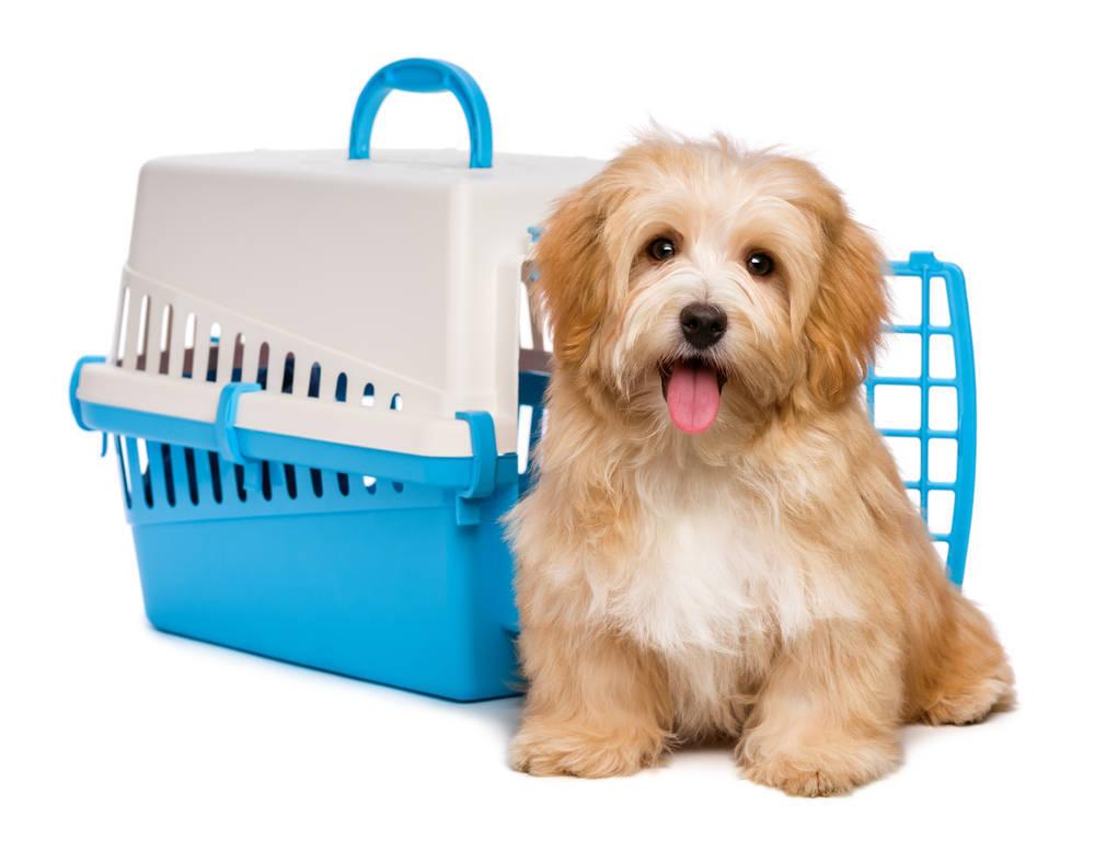 Qué debes saber para viajar con tu mascota en avión
