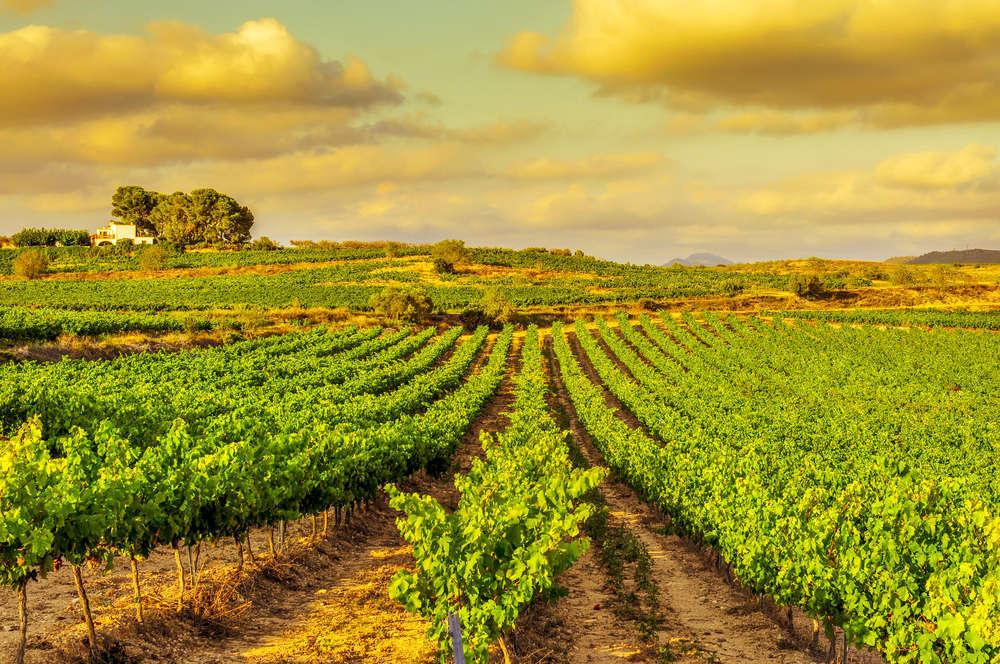 La Vuelta a España vinícola